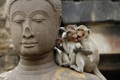 Yoga & Monkey Mind – How to Live in Harmony with Your Mental Companion